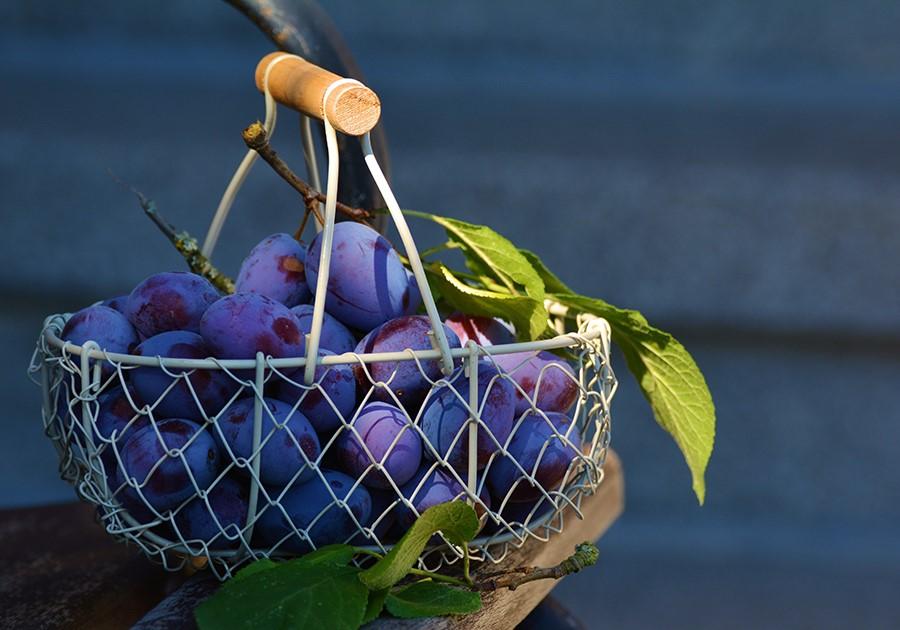 cestino con uva